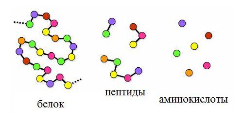 Пептиды картинки органопрепараты пептиды